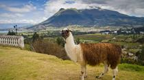 Otavalo Day Trip from Quito: Craft Market and Parque Condor, Quito