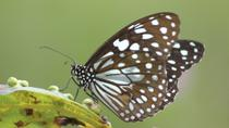 St Thomas Butterfly Garden Tour with Optional Coral World Ocean Park Admission, St Thomas, ...