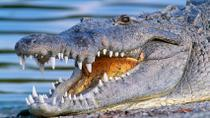 Miami Everglades Airboat Adventure with Transport, Miami, Half-day Tours