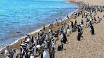 Day Trip to Punta Tombo, Puerto Madryn, Day Trips