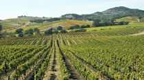 Casablanca Valley Private Wine Wine Tour: Casas del Bosque and Emiliana Wineries, Santiago, Wine ...