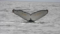 Whale Watching & Wildlife Eco Tour from San Francisco, San Francisco, Day Cruises