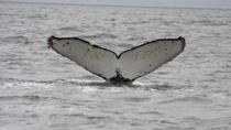 Whale Watching & Wildlife Eco Tour von San Francisco, San Francisco