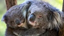Healesville Sanctuary and Puffing Billy Stream Train Day Trip from Melbourne, Melbourne, Nature & ...
