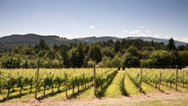 Vancouver Landausflug: Private Fraser Valley Weintour, Vancouver, Ports of Call Tours