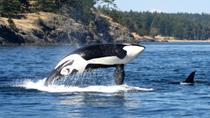 Victoria and Whale Watching, Vancouver, Dolphin & Whale Watching