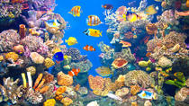 Valencia Shore Excursion: Valencia Hop-On-Hop-Off Tour with Optional Oceanographic Aquarium Ticket, ...