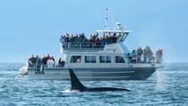 Whale-Watching Cruise with Expert Naturalists, Victoria
