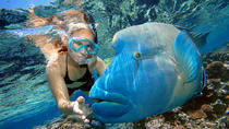 Cairns 2-Day Combo: Great Barrier Reef Cruise and Kuranda Day Trip, Cairns & the Tropical ...
