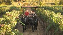 Wine Country Tour by Horse and Carriage, Napa & Sonoma, Wine Tasting & Winery Tours