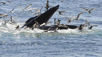 Reykjavik Whale Watching Cruise plus Whales of Iceland Entrance Ticket, Reykjavik, Dolphin & Whale...
