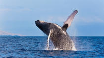 Whale-Watching Tour from Reykjavik, Reykjavik, Dolphin & Whale Watching