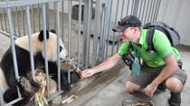 Panda Rescue Center Volunteer for a Day, Chengdu