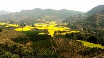 Private Tour: Huanglongxi Ancient Town and Countryside Trekking from Chengdu, Chengdu