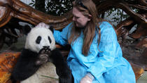 Viator Exclusive: Volunteer at Panda Breeding Center with Optional Panda Holding, Chengdu, Nature & ...