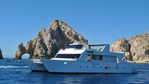 Los Cabos Reef Snorkeling Cruise, Los Cabos, Private Sightseeing Tours