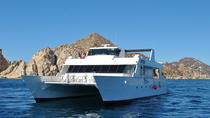Whale Watching Cruise in Los Cabos Including Lunch, Los Cabos, Dolphin & Whale Watching