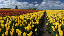 Dutch Windmills and Countryside Day Trip from Amsterdam Including Cheese Tasting in Edam, ...