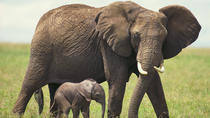 2-Day Private Western Cape Safari from Cape Town: Big Five Game Drive and Cango Wildlife Ranch, ...