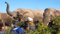 2-Day South African Wildlife Safari from Cape Town, Cape Town, Multi-day Tours