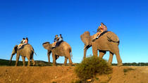 3-Day Garden Route Tour from Cape Town with Big Five Game Drive, South Africa, Multi-day Tours
