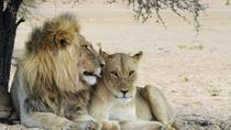 3-Day Private Garden Route Tour from Cape Town with Big Five Game Drive, South Africa, Multi-day ...