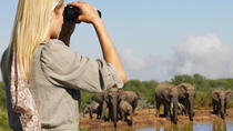 4-Day Addo and Garden Route Safari from Cape Town, Cape Town