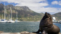 Hout Bay, Cape Peninsula and Optional Boulders Beach Penguins Day Trip from Cape Town, Cape Town, ...