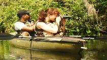 Mangrove Forest Kayak Eco-Tour in Florida Everglades, Everglades National Park, Airboat Tours