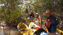 Marco Island Kayak Tour with Optional Beach Landing, Everglades National Park, Kayaking & Canoeing
