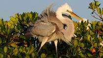Small-Group Wildlife Boat Tour in Florida Everglades National Park, Everglades National Park, ...