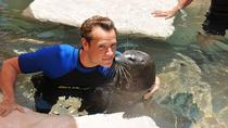 Swim with the Seals at the Miami Seaquarium, Miami, Family Friendly Tours & Activities