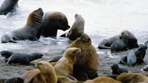 Shore Excursion: Private Day Trip to Peninsula Valdes from Puerto Madryn, Puerto Madryn, Ports of ...