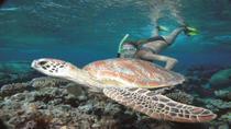 Great Barrier Reef Sailing and Snorkeling Cruise from Port Douglas, Port Douglas, Day Cruises