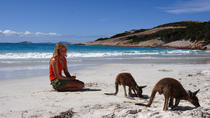 9-Day Perth to Adelaide Nullarbor Adventure with Optional Shark Cage Dive and Swim with Sealions...