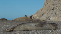 Full Day Tour to Punta Ninfas from Puerto Madryn, Puerto Madryn, Full-day Tours