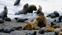 Peninsula Valdes Full Day Tour from Puerto Madryn With optional Whale Watching, Puerto Madryn, Day ...