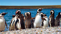 Puerto Madryn Tours, Travel & Activities, Argentina