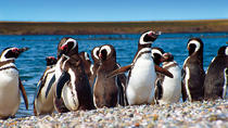 Punta Tombo Penguin Colony and Union Beach from Puerto Madryn with optional Toninas Watching, ...
