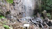 Springbrook Mountain Day Trip from Brisbane Including Antarctic Beech Forest, Brisbane, Day Trips