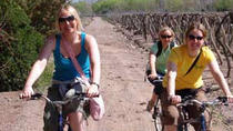 Small-Group Bike Tour in Mendoza Wine Country, Mendoza
