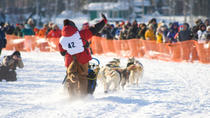 7-Day Winter Alaska Experience: Anchorage and Iditarod Trail Sled Dog Race, Anchorage