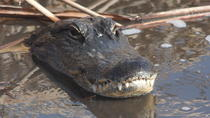Small-Group Tour: Everglades Adventure Day Trip from Ft Lauderdale, Fort Lauderdale, Eco Tours