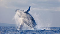 Stradbroke Island and Whale Watching Cruise Including BBQ Lunch, Gold Coast, Dolphin & Whale...