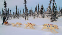 4-Day Northern Lights and Dog Mushing Adventure, Vancouver, Multi-day Tours