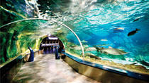 Istanbul Aquarium and Aqua Florya Independent Shopping Trip, Istanbul, Attraction Tickets