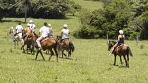 8-Day Best of Northwest Costa Rica from San Jose: Arenal Volcano National Park, Alajuela and...