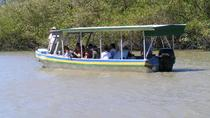 Palo Verde National Park and Coffee Tour, Guanacaste and Northwest, Day Trips