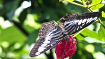 Private Penang Tour: Butterfly Farm and Penang Botanic Gardens, Penang, Nature & Wildlife