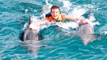 Dolphin Royal Swim Including Aquaventuras Park Entrance, Puerto Vallarta, Swim with Dolphins
